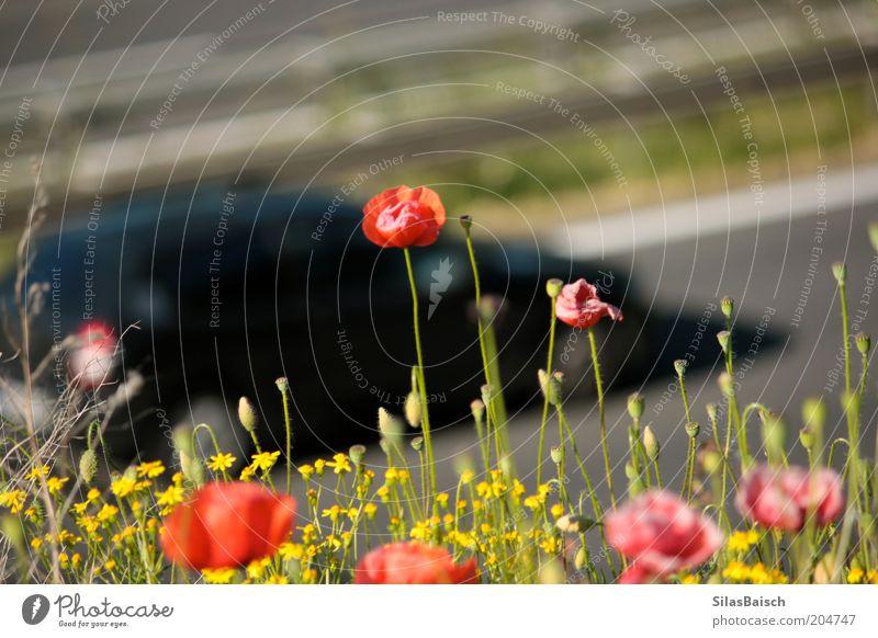 Autobahn, Autobahn Natur Blume Pflanze Sommer Gras PKW Luft Straßenverkehr Umwelt Verkehr Wachstum Verkehrswege Schönes Wetter Autofahren Grünpflanze
