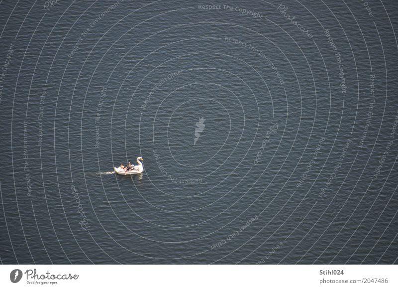 mein lieber Schwan..... Freude Glück Tretboot Ferien & Urlaub & Reisen Ausflug Sommer Mensch Freundschaft 4 Wasser Schönes Wetter See Erholung fahren träumen