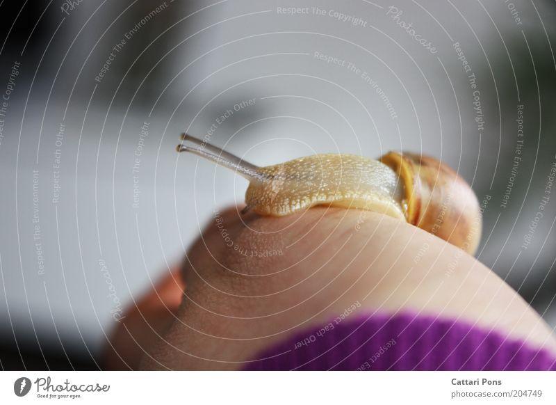 Snail Natur Hand Tier wild Lebewesen Wildtier Schnecke Glätte Fühler langsam schleimig Schneckenhaus Weichtier Schneckenschleim