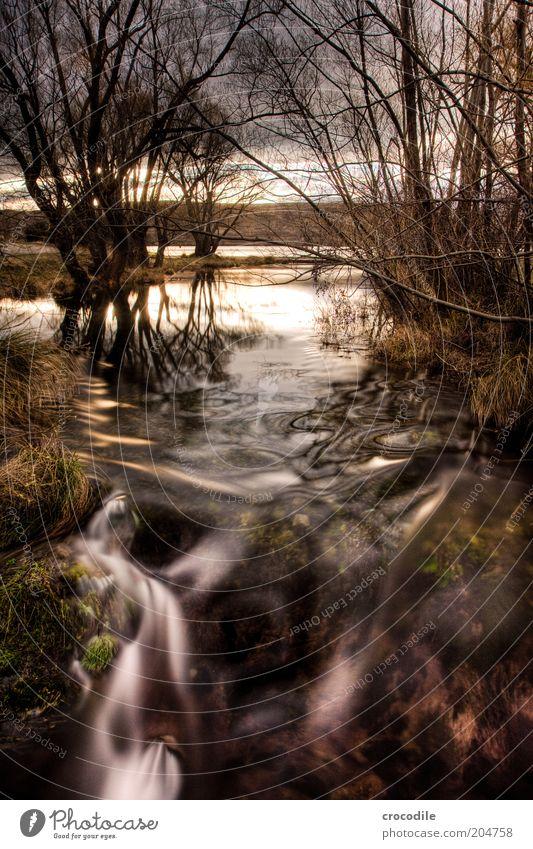 New Zealand 86 Natur Wasser schön Baum Pflanze Leben dunkel See Landschaft Luft Umwelt geheimnisvoll außergewöhnlich Seeufer Urelemente bizarr