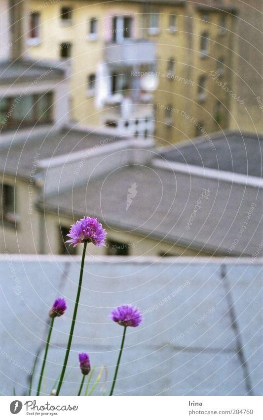 Garden State II Stadt Umwelt Wand Mauer Blüte grau braun Fassade trist Häusliches Leben Wachstum Dach violett Kräuter & Gewürze Balkon Stengel