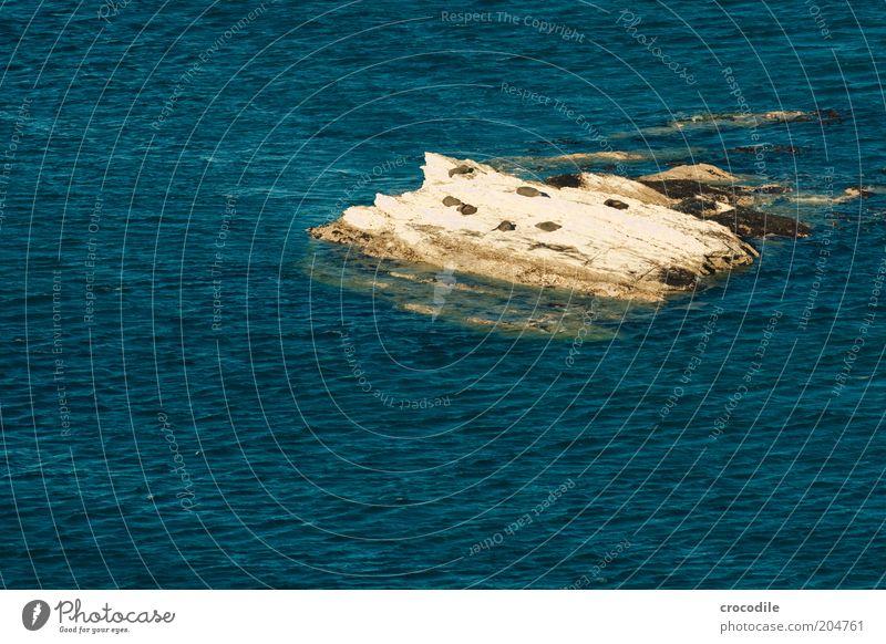 New Zealand 87 Umwelt Natur Landschaft Schönes Wetter Hügel Felsen Wellen Küste Meer Pazifik Tier Wildtier Robben Robbenkolonie beobachten ästhetisch
