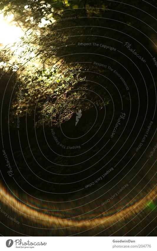 Sonnenbruch 5:08 Natur Pflanze Sonne Ferne Umwelt Wärme Glück hell Stimmung Park frisch außergewöhnlich Schönes Wetter wählen Begeisterung Frühlingsgefühle