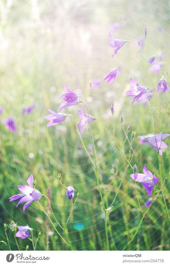 Sommerwiese. Natur grün Pflanze ruhig Blüte Umwelt Zeit ästhetisch Wachstum Romantik violett Duft nachhaltig Blütenblatt