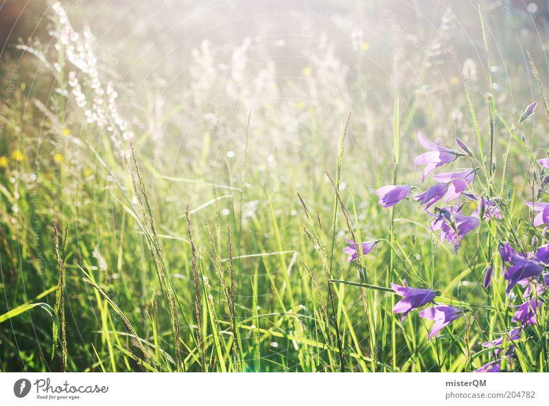 Moment of Peace. Natur Blume Pflanze Sommer ruhig Einsamkeit Wiese Gras Umwelt ästhetisch Wachstum violett Duft Weide Schönes Wetter Blumenwiese