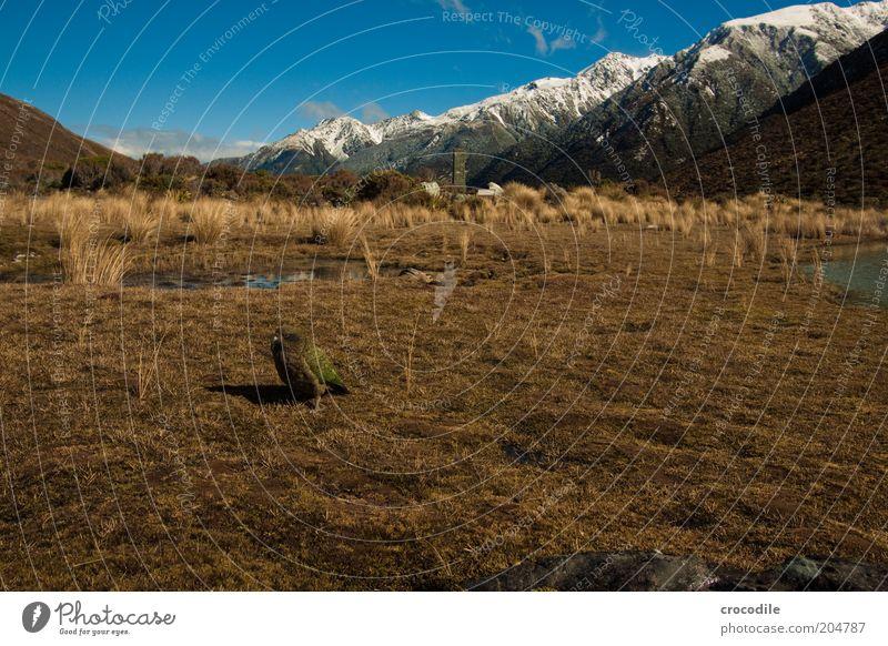 New Zealand 93 Himmel Natur Ferien & Urlaub & Reisen ruhig Berge u. Gebirge Landschaft Umwelt Insel Urelemente außergewöhnlich Alpen Reisefotografie Gipfel Schönes Wetter Grasland Neuseeland