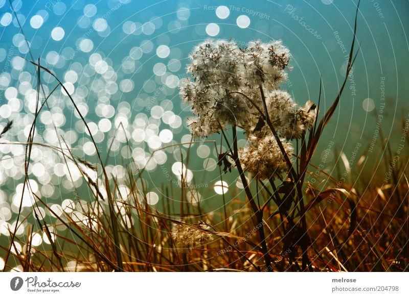 Lichterkette Freiheit Sommer Natur Pflanze Schönes Wetter Wildpflanze Berge u. Gebirge Wasser blau braun grün Gefühle Stimmung Einsamkeit Farbfoto