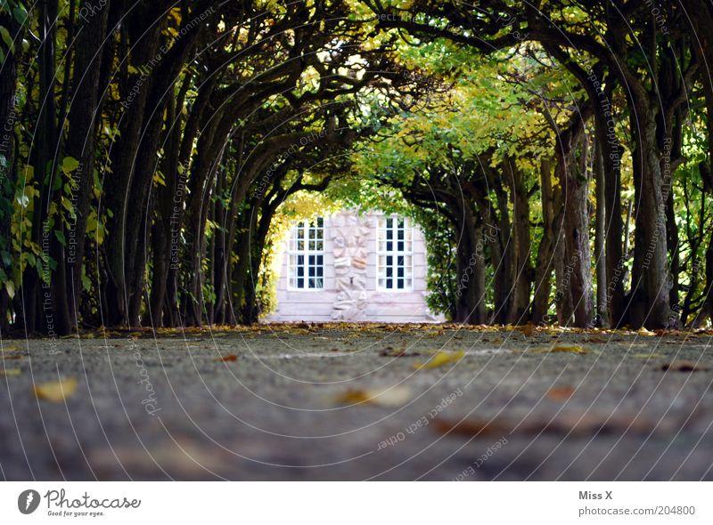 Lustgarten Garten Baum Burg oder Schloss Park Straße Wege & Pfade Märchenschloss Allee Farbfoto Außenaufnahme Menschenleer Textfreiraum unten Textfreiraum Mitte