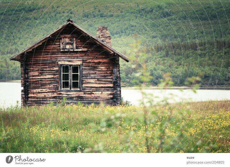 Hütte Ferien & Urlaub & Reisen Ausflug Haus Umwelt Natur Landschaft Sommer Schönes Wetter Blume Wiese Wald Seeufer grün Einsamkeit Norwegen Skandinavien