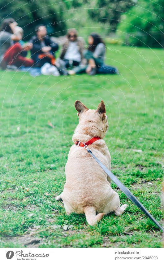 Hund an Leine Sommer Stadt Tier ruhig Freude Berlin Glück Freundschaft Freizeit & Hobby Zufriedenheit Park sitzen Fröhlichkeit Lebensfreude beobachten