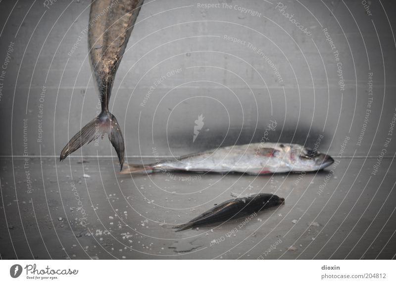 Lisboa Fish Market Massacre Fisch Ernährung Bioprodukte Tier Schuppen Flosse Schwanzflosse 3 hängen liegen kalt lecker trashig grau silber Tod Natur skurril