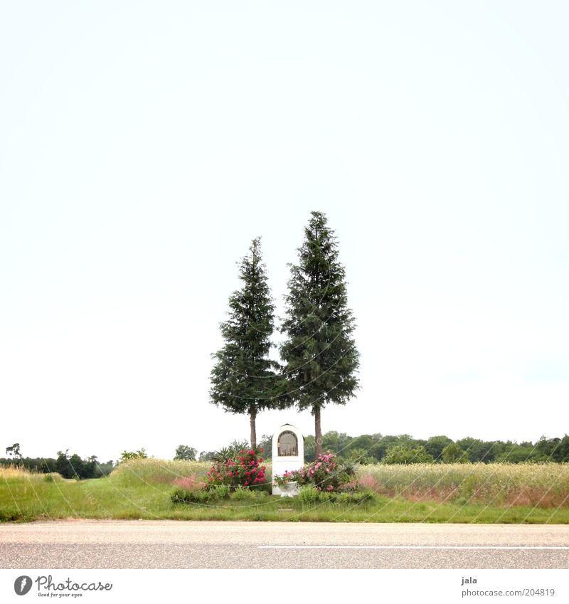 schutzpatron Natur Himmel Baum Blume Straße Wiese Gefühle Landschaft Feld Hoffnung Sicherheit Schutz Vertrauen Tanne Verkehrswege Gebet
