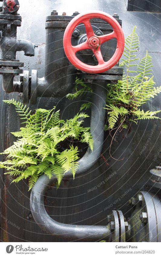 Blume aus Metall Design Maschine Zeitmaschine Natur Pflanze exotisch Stahl alt ästhetisch grün rot silber Kreativität Ventil Dinge Material Farbfoto