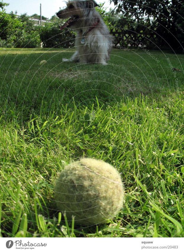Ball mit Hund Natur Tier Garten