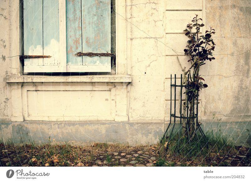 closed Pflanze Blume Rose Haus Gebäude Architektur Mauer Wand Fassade Fenster Stein Holz Wachstum alt historisch Gefühle Romantik Einsamkeit Nostalgie