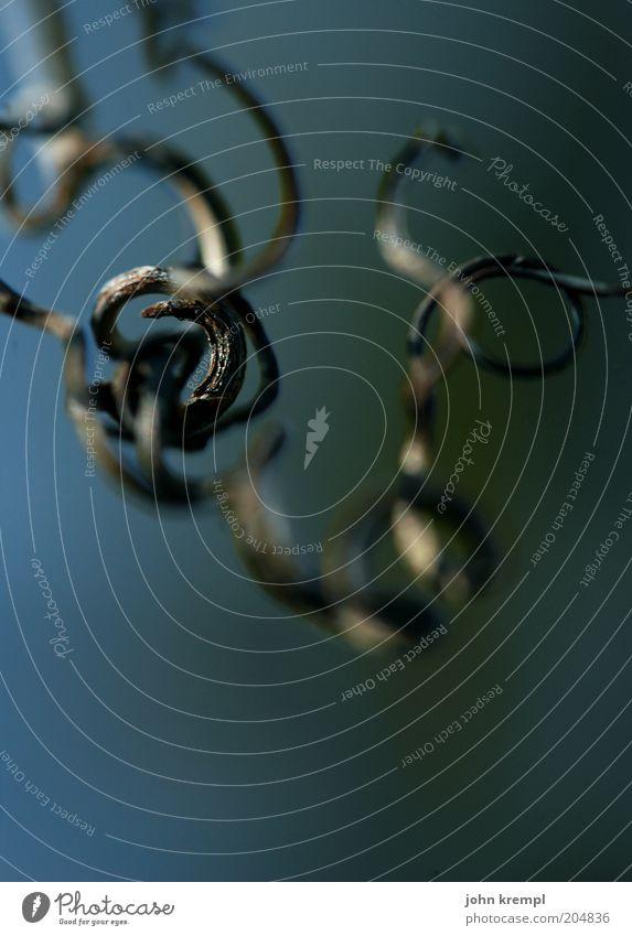 gedankenspirale Pflanze Zweig dunkel rund Natur Spirale Wachstum Gedeckte Farben Außenaufnahme Textfreiraum unten Windung verdreht laublos bizarr