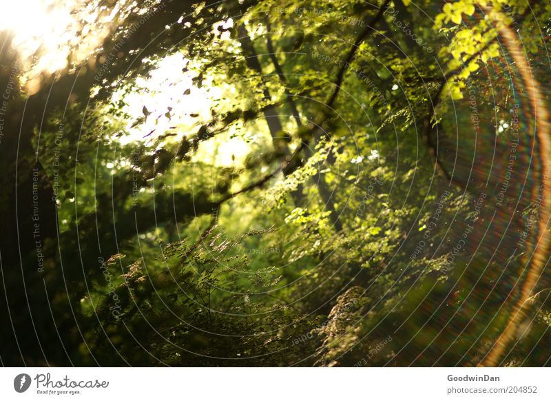 Sonnenbruch 5:34 Natur schön Sonne Pflanze Wald Frühling Park Wärme Stimmung Wetter Umwelt authentisch leuchten Schönes Wetter Blendenfleck