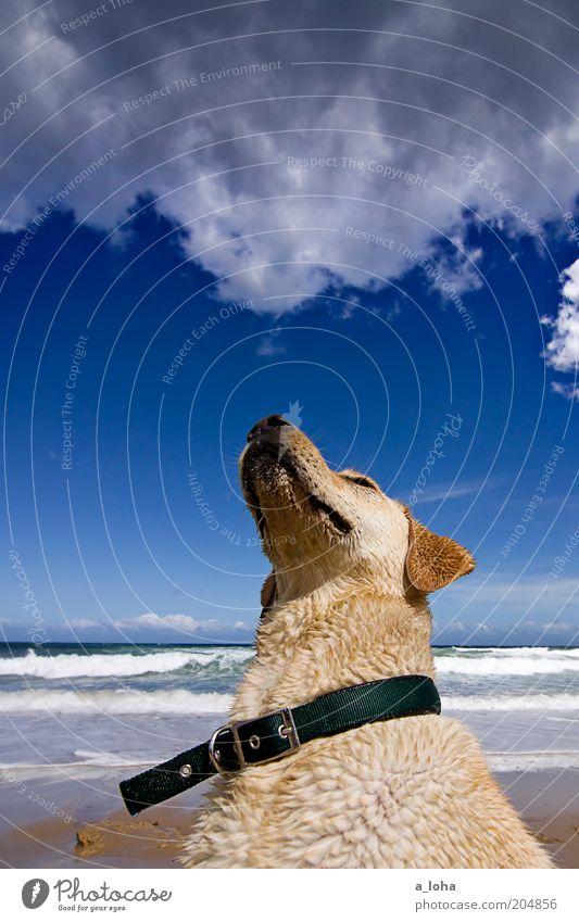 the dog who stares at clouds Landschaft Wolken Sommer Schönes Wetter Wellen Küste Strand Meer Tier Tiergesicht Fell 1 beobachten sitzen warten Ferne nass