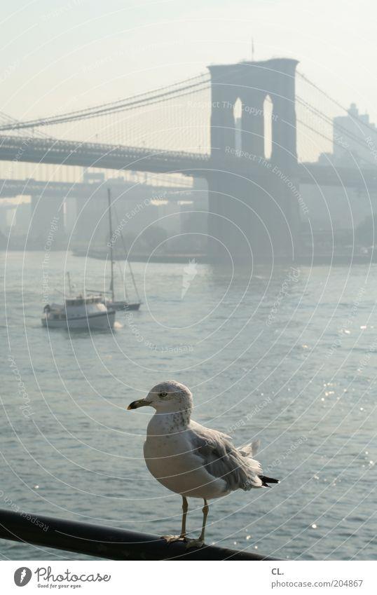 möwe and the city Stadt Ferien & Urlaub & Reisen Tier Architektur Wasserfahrzeug Vogel Verkehr Brücke Flügel Fluss Bauwerk Tiergesicht Schönes Wetter Aussicht
