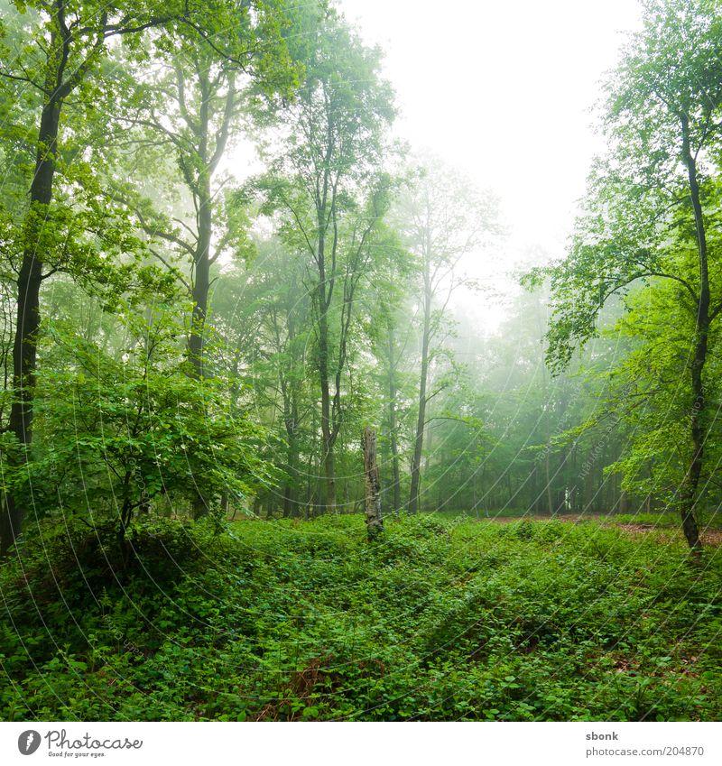 Entspannung Natur Baum grün Pflanze ruhig Wald Landschaft Nebel Umwelt Sträucher Urwald Grünpflanze Wildpflanze Laubwald