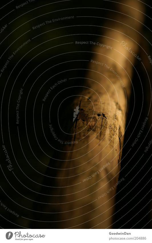 Sonnenbruch 5:19 Umwelt Natur Sonnenlicht Holz alt authentisch Farbfoto Außenaufnahme Menschenleer Starke Tiefenschärfe Ast laublos Makroaufnahme