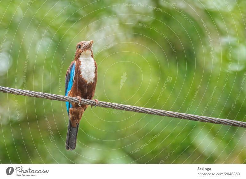 White-Breasted Kingfisher Natur Pflanze Baum Landschaft Blatt Tier Wald Wärme Umwelt Vogel fliegen Wildtier Feder Flügel Seeufer Flussufer