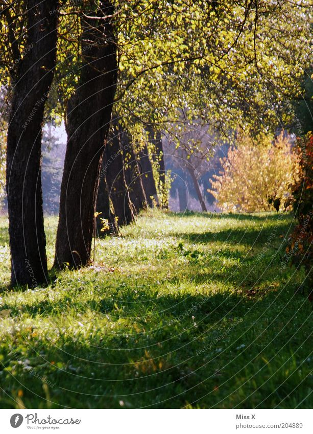kleines Idyll Natur Baum Sommer ruhig Erholung Herbst Wiese Gras Garten Wege & Pfade Park Landwirtschaft Reihe Allee Apfelbaum aufgereiht