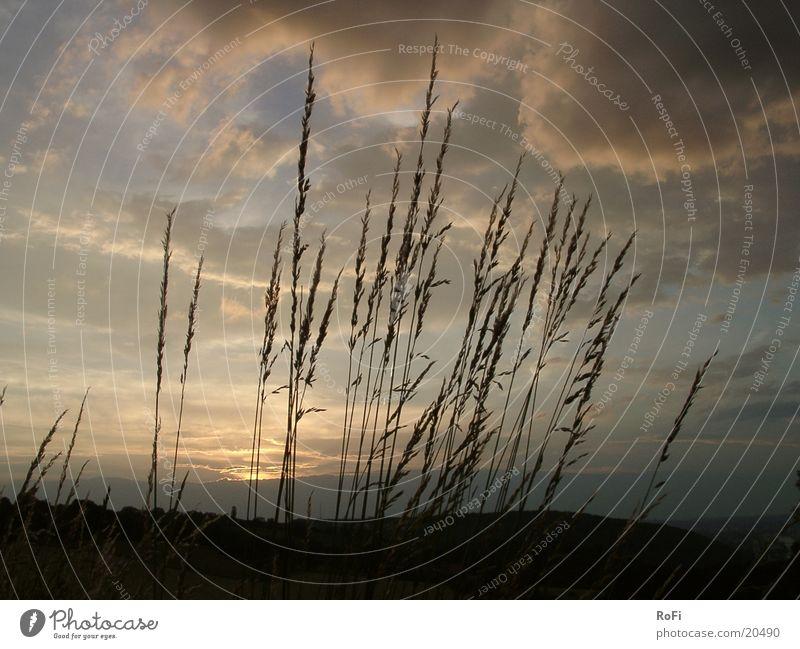 Gräser im Sonnenuntergang Wolken Gras Landschaft