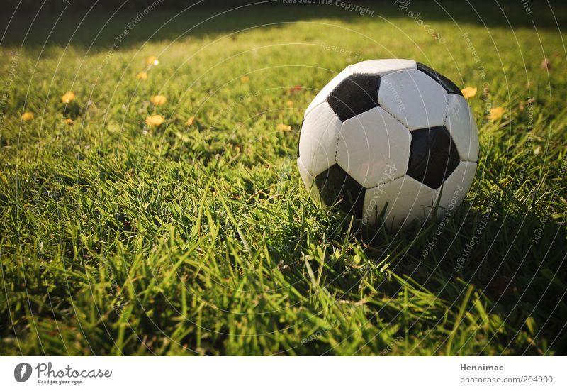 Klein, aber mächtig! Freizeit & Hobby Sport Ballsport Fußball Sportstätten Fußballplatz Gras Wiese Leder Zeichen retro gelb grün schwarz weiß Leidenschaft