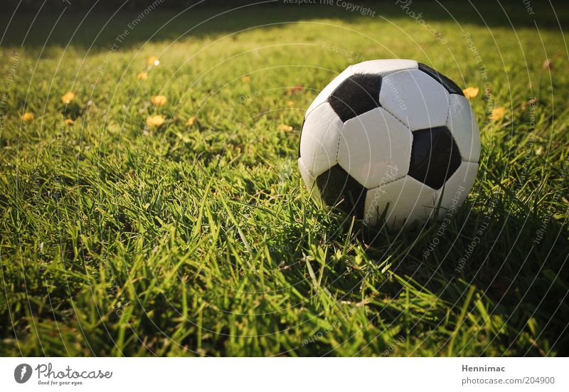 Klein, aber mächtig! weiß grün Freude schwarz gelb Sport Wiese Gras Fußball retro Ball rund Freizeit & Hobby Zeichen Leidenschaft