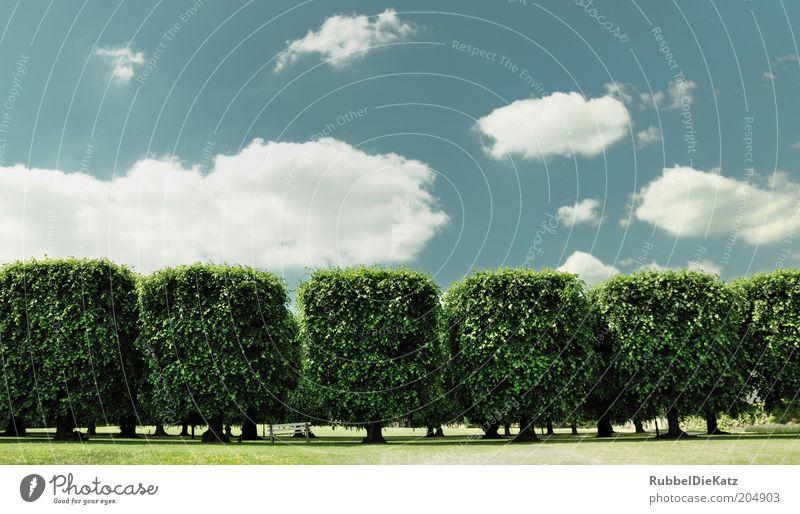 Square Trees Natur Himmel Baum grün Sommer Wolken Gras Park Landschaft ästhetisch außergewöhnlich Reihe Schönes Wetter Gartenbau Blauer Himmel Weitwinkel