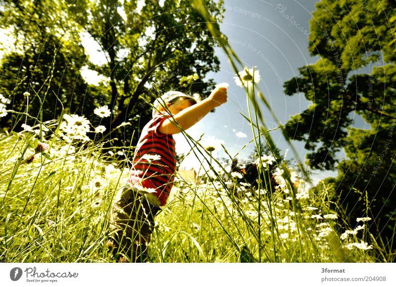 GARTEN Ausflug Freiheit Sommer Sommerurlaub Garten Mensch Kleinkind 1 1-3 Jahre Natur Pflanze Klima Schönes Wetter Blume Gras Park Wiese berühren Blühend Denken