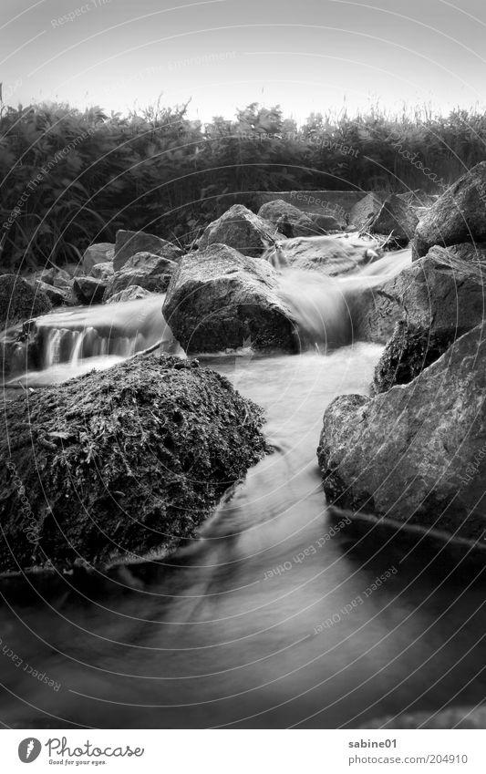 Bach Freiheit Umwelt Natur Landschaft Pflanze Luft Wasser Sommer Klima Wetter Sträucher Moos Fluss Menschenleer Stein ästhetisch dunkel grau schwarz weiß