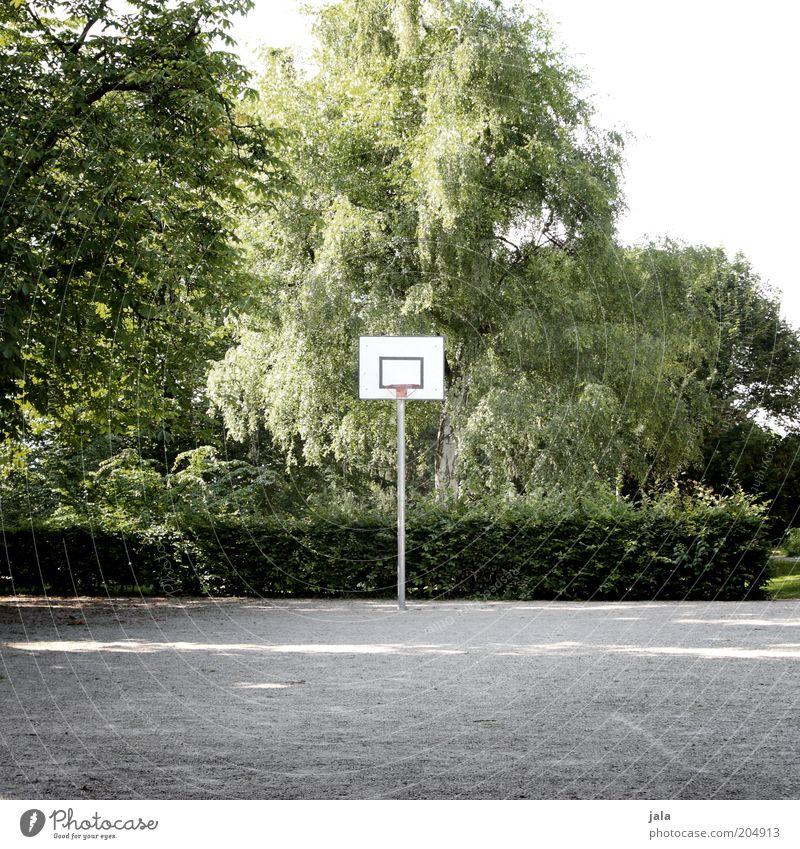spielplatz im grünen Freizeit & Hobby Sport Basketball Basketballplatz Basketballkorb Natur Pflanze Baum Sträucher Hecke Park Platz grau weiß Farbfoto