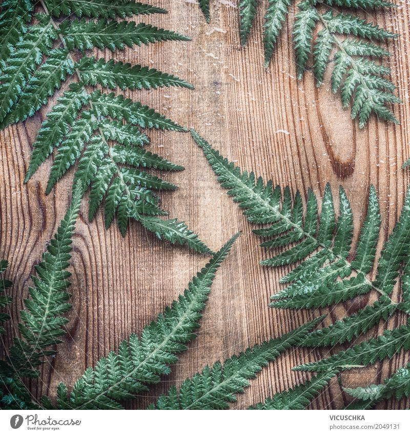 Farn Blätter auf rustikalem Holz Stil Design Ferne Umwelt Natur Pflanze Blatt Garten Ornament Inspiration arrangiert Hintergrundbild altehrwürdig Farnblatt