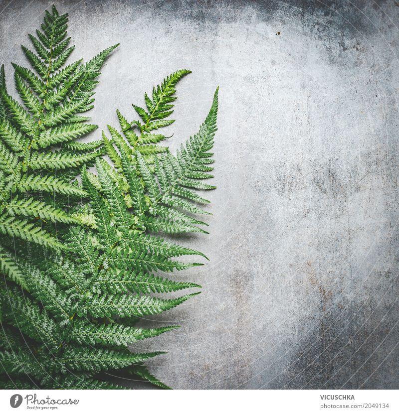 Grüne Farn Blätter auf grau Beton Hintergrund Stil Design Natur Pflanze Sträucher Blatt Oase Mauer Wand Coolness Inspiration Farnblatt Betonplatte Betonmauer