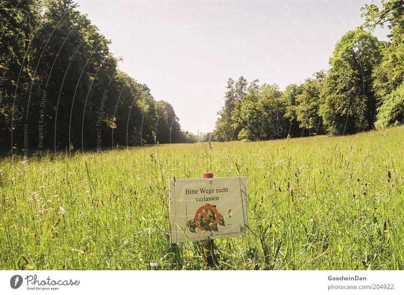Naja, ich weiß ja nicht... Natur schön alt Himmel grün Pflanze Ferne Wiese Park Wärme Landschaft Luft Stimmung Wetter Umwelt Schilder & Markierungen