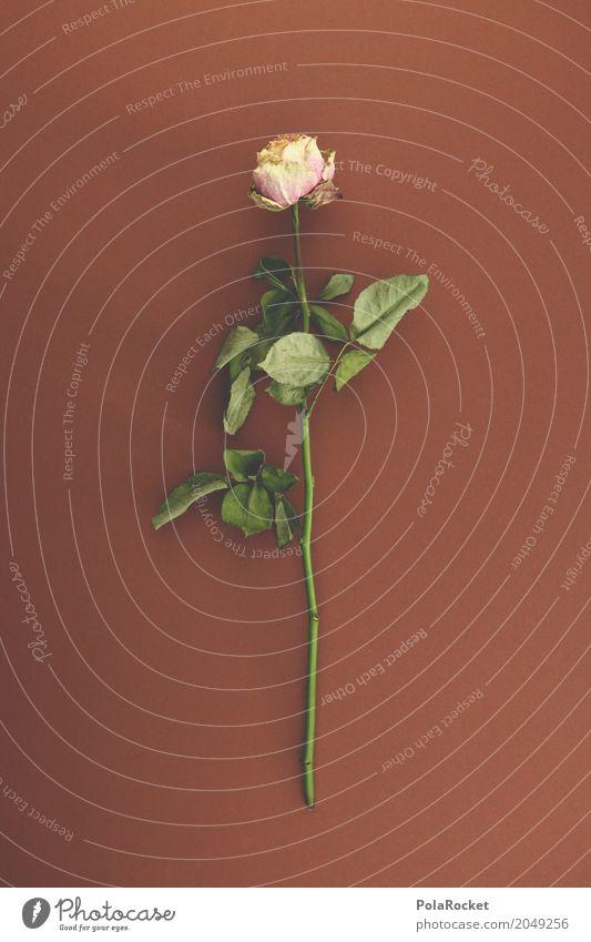 #A# Peace Kunst Kunstwerk ästhetisch Rose Rosenblätter Rosengarten Trockenblume Trauer Trauergemeinde erinnern Tod friedlich vertrocknet getrocknet Blume
