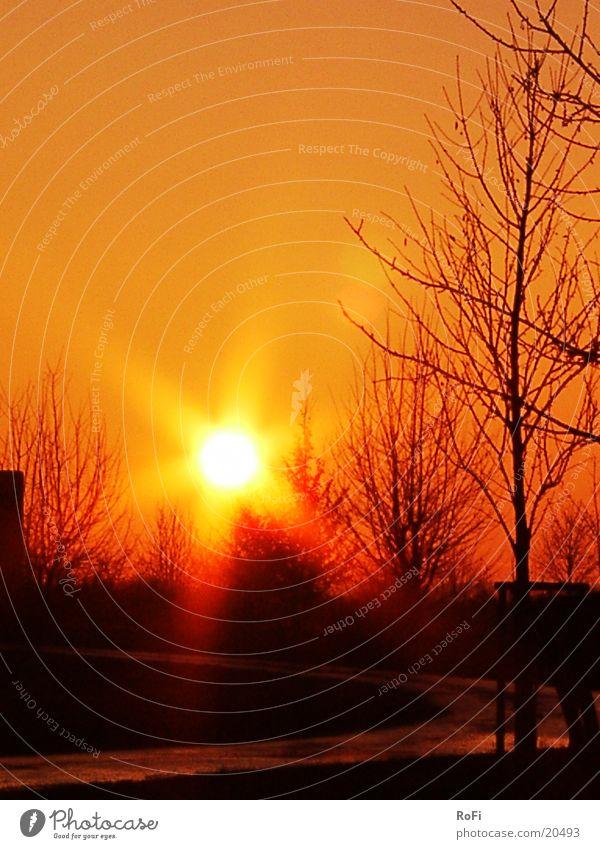 Sonnenuntergang Baum Beleuchtung orange