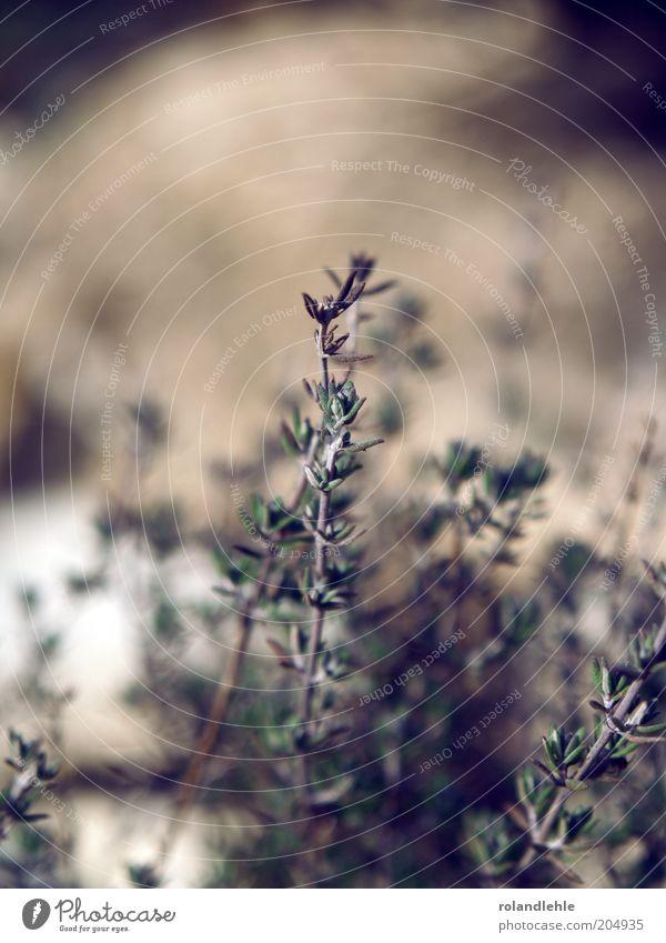 Frühling Natur Pflanze Sträucher Stengel Grünpflanze Zeit