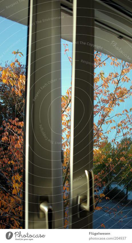 Windows 2009 Herbst Warmherzigkeit Parkplatz Fenster Fensterscheibe Himmel offen Herbstlaub herbstlich Herbstlandschaft Herbstbeginn Windows XP Fensterplatz