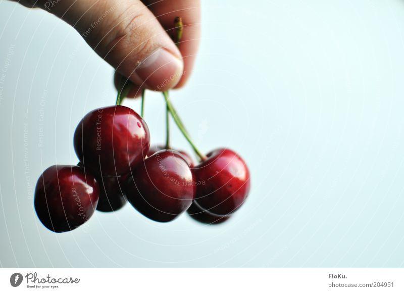 lecker Kirschen! Mann schön weiß rot Ernährung glänzend Lebensmittel Frucht Finger süß rund festhalten hängen Diät Bioprodukte
