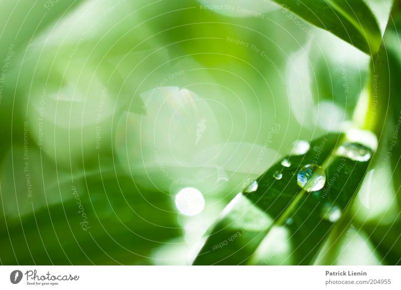 drops Umwelt Natur leuchten grün Pflanze Tropfen sanft schön strahlend tief Frühling Farbfoto Makroaufnahme Menschenleer Textfreiraum links Tag Unschärfe