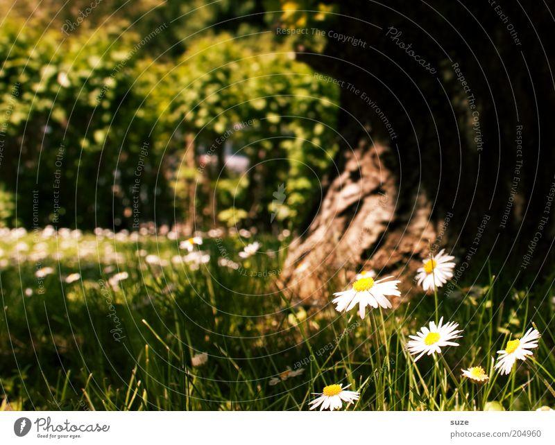 Glücksmoment harmonisch Wohlgefühl Zufriedenheit Erholung ruhig Duft Sommer Garten Umwelt Natur Landschaft Pflanze Frühling Schönes Wetter Baum Blume Gras Blüte