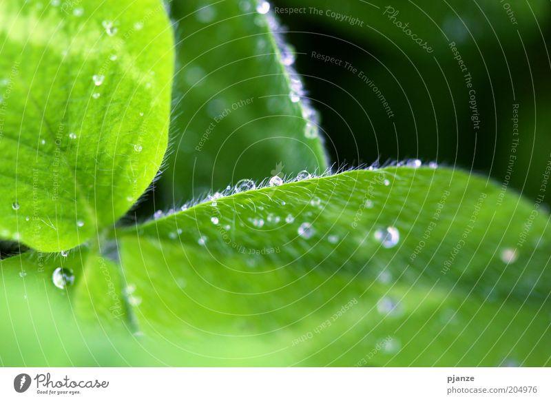Tropfen Natur Blume grün Pflanze Blatt glänzend Wassertropfen nass frisch ästhetisch Tropfen feucht Tau Grünpflanze Reinheit Makroaufnahme