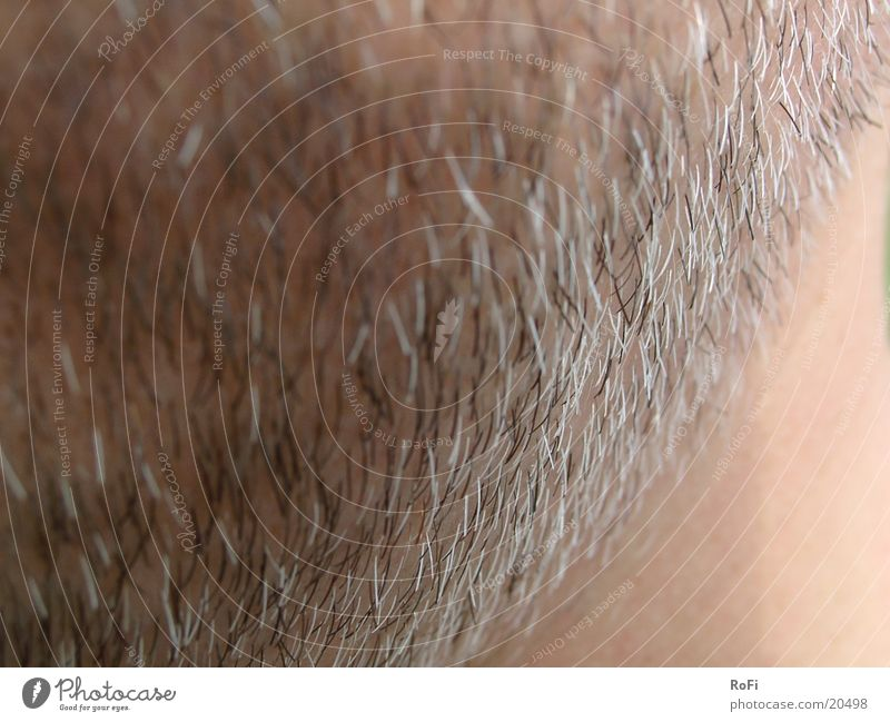 Gesichtsbehaarung Mann Haare & Frisuren Bart Rasieren Stoppel Gesichtshaar
