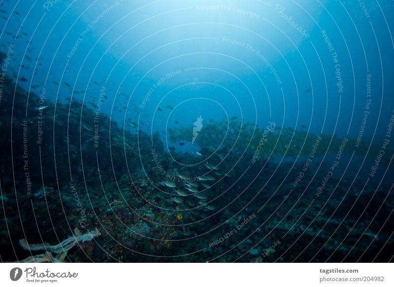 DIVER'S PARADISE Natur Wasser Meer blau Fisch tauchen Idylle unten Unterwasseraufnahme Malediven Paradies Riff Meerestiefe Schwarm Lichtpunkt Fischschwarm
