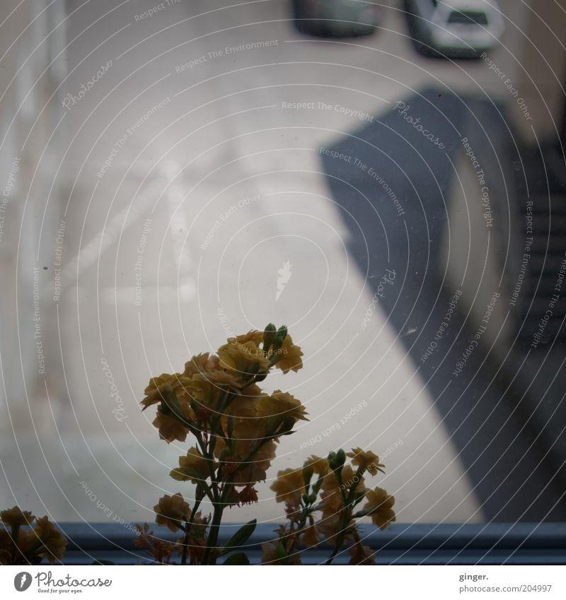 Bergische Hinterhof-Tristesse Pflanze Blume Fenster dunkel oben grau Blüte Autofenster trist Langeweile Parkplatz banal Alltagsfotografie Fensterblick
