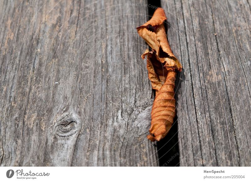 Überbleibsel Blatt Herbst Holz grau braun trocken Holzbrett Furche Rest Herbstlaub Textfreiraum links welk