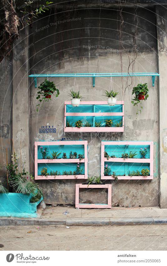 Straßen-Deko Ferien & Urlaub & Reisen Pflanze Stadt Blatt Haus Wand Blüte Mauer Garten Tourismus Fassade Wohnung Häusliches Leben Freizeit & Hobby